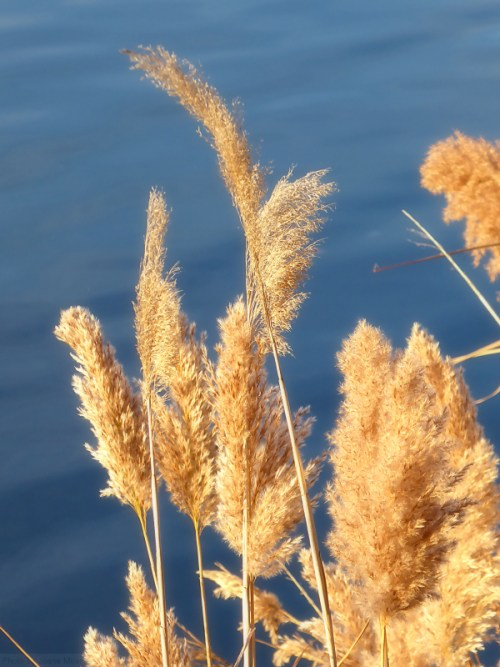 feathery-ferns2