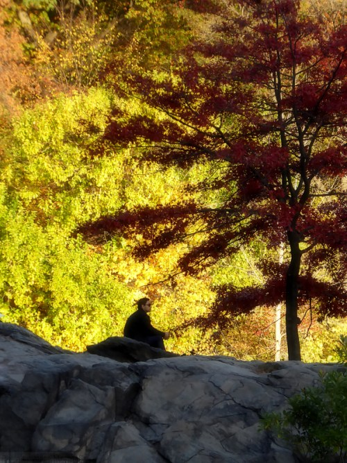 man-on-a-rock-in-central-park