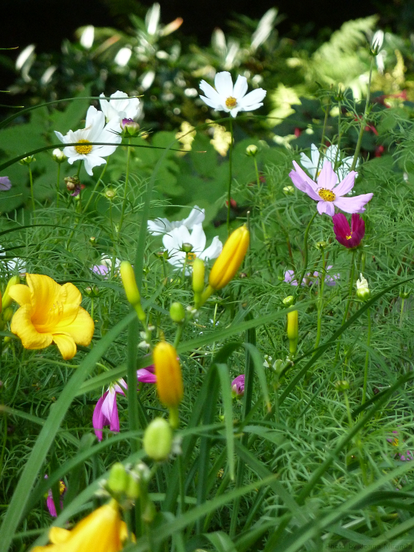 Photo of summer garden taken by Joana Miranda