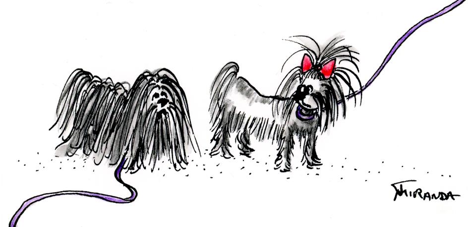 A Dog's Life cartoon of two Shih Tzu dogs by Joana Miranda
