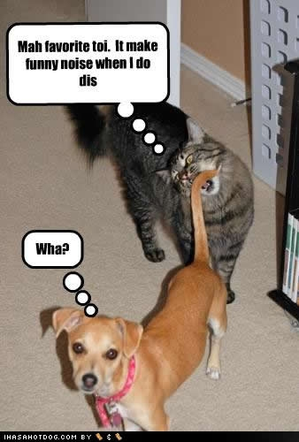 Dogs and Cats