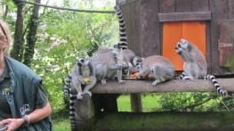 Feeding time, Fota Wildlife Park