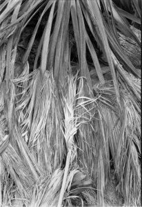 1995003001 Anza Borrega Fan Palms, CA 1995