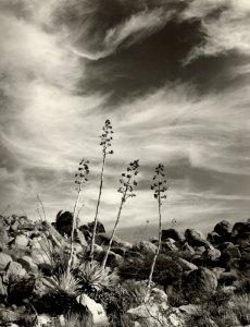 2001054012 Desert Waltz, NM 2001