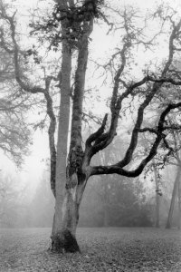 2002048008 Champoeg Fog, OR 2002