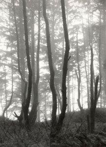 2009024004 Cape Arago Trees, OR 2009