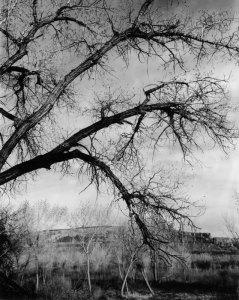 2011004003 San Rafael Trees, UT 2011