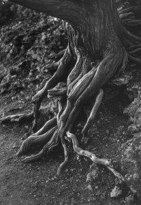 NR9301202 Root 1993