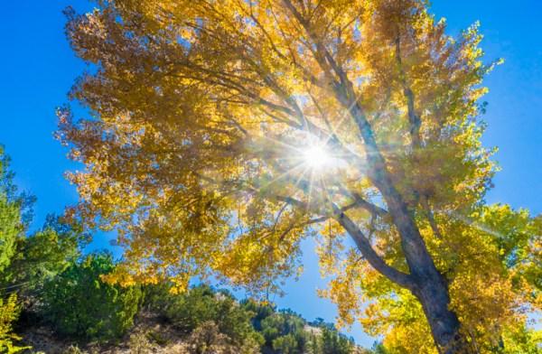 20190041DC Sunny Tree, NM 2019