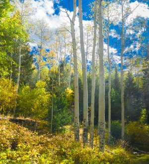 20190032DC Fall Color, NM 2019