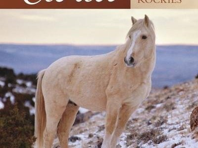 Kathrens' Fascination with Cloud: Wild Stallion of The Rockies