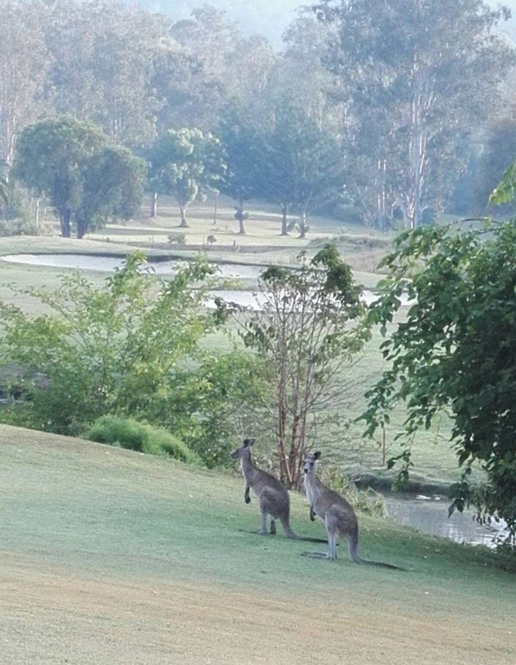 Just another morning in Queensland