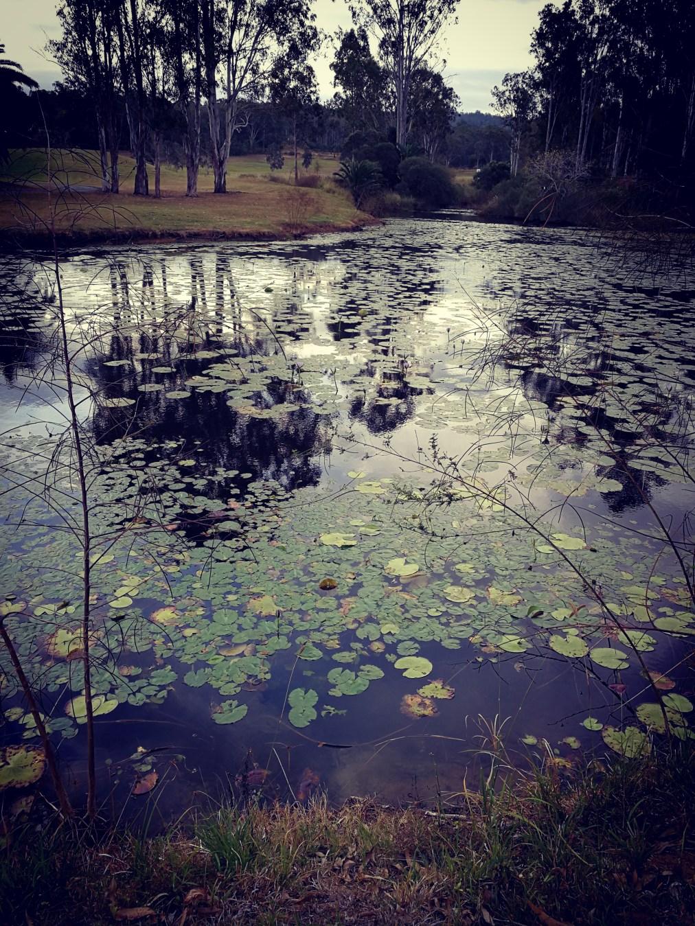 Monet in Oz