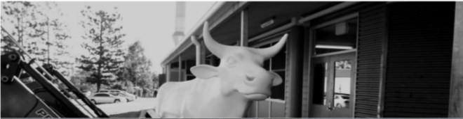 , Meet Bullinda Bullguard, the robotic, cotton wool bull!
