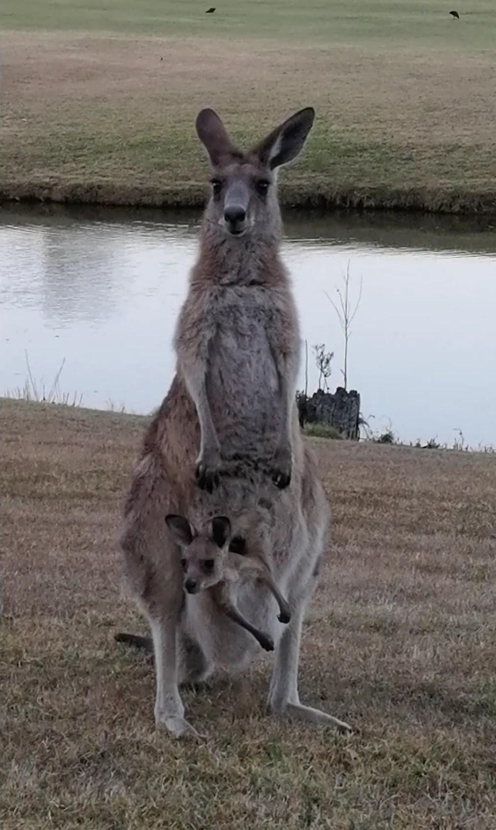 Mummy and Joey (video)
