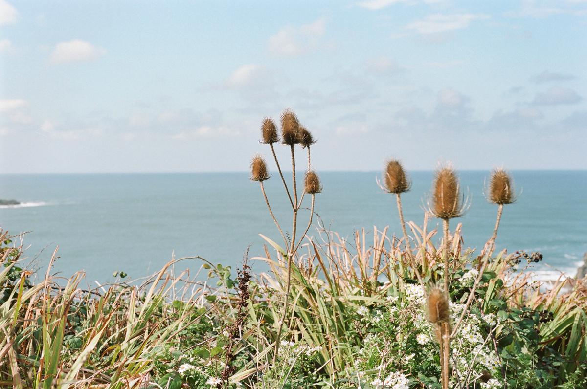 Cornwall plant