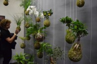 Lenka Hrubá has designed this hanging household plant, kokedamy. She is inspired by bonsai from Japan, so she has developed her garden in the air. Kokedamy is easy to keep in home and you just need to put the soil in water once a week while water would not drip. Some has put in Czech glass, called aerária. She said any kind of plant can be hanged on. She owns a shop called Garden on a Thread.