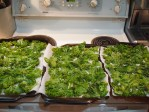 Krispy Kale Chips - ready to be baked
