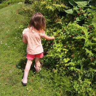 My niece picking her first black raspberries. Copyright Jo-Ann Blondin