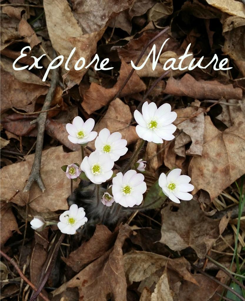 Explore Nature - Copyright Jo-Ann Blondin
