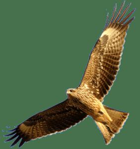 Owl-Above-600x638px