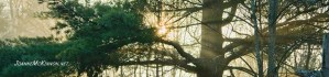 White pine tree in shadow