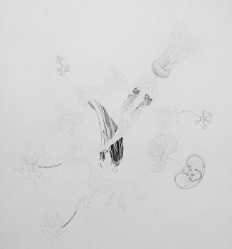 1. Joanne Proctor • Lydia Holmes • Grace McMurray, Untitled, Graphite on Paper, 84 x 59.4cm, 2013 © JLG Constructions, 2014