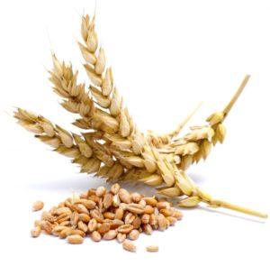 Bulgur Wheat Grain