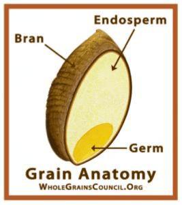 Whole Grain Anatomy