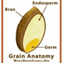 Whole Grain used for pasta