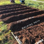 my garden plot with rows and soil