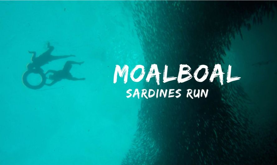 Pescador Island, Moalboal: DIY Itinerary