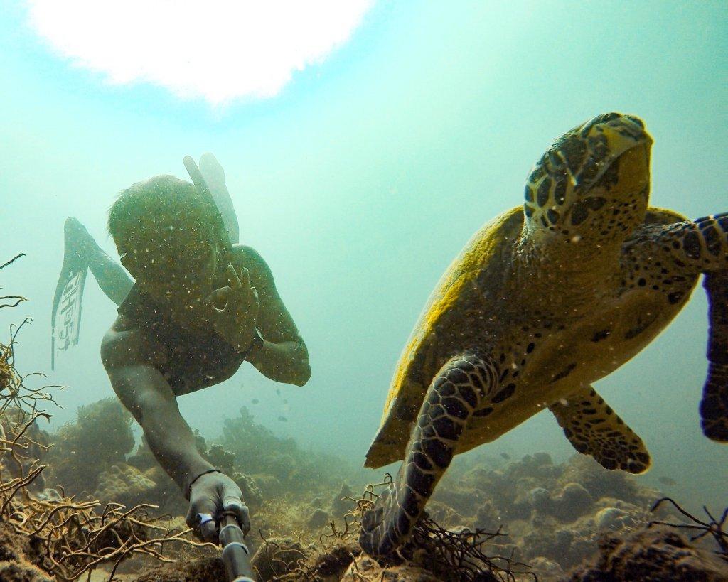 sea turtle in batangas