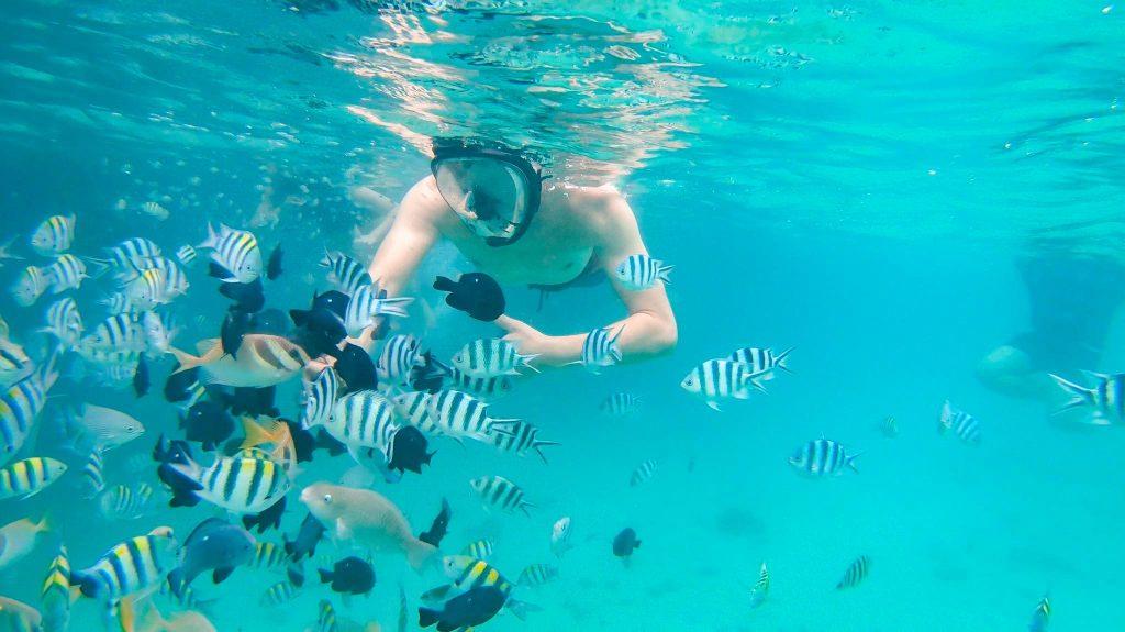 looc fish sanctuary