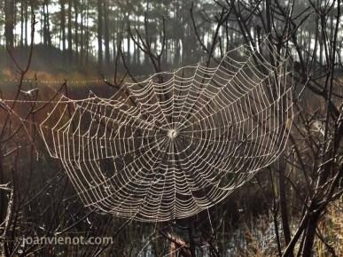 2012-1103 Spiderweb