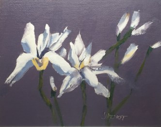Oil painting of white Iris blooms on a dusty purple background, painted en plein air