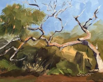 2015-0316 Scrub Pine on St. George Island