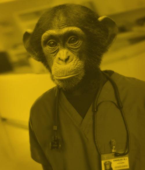 doctor-chimp-web