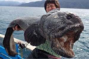 Wolf Fish off Japan