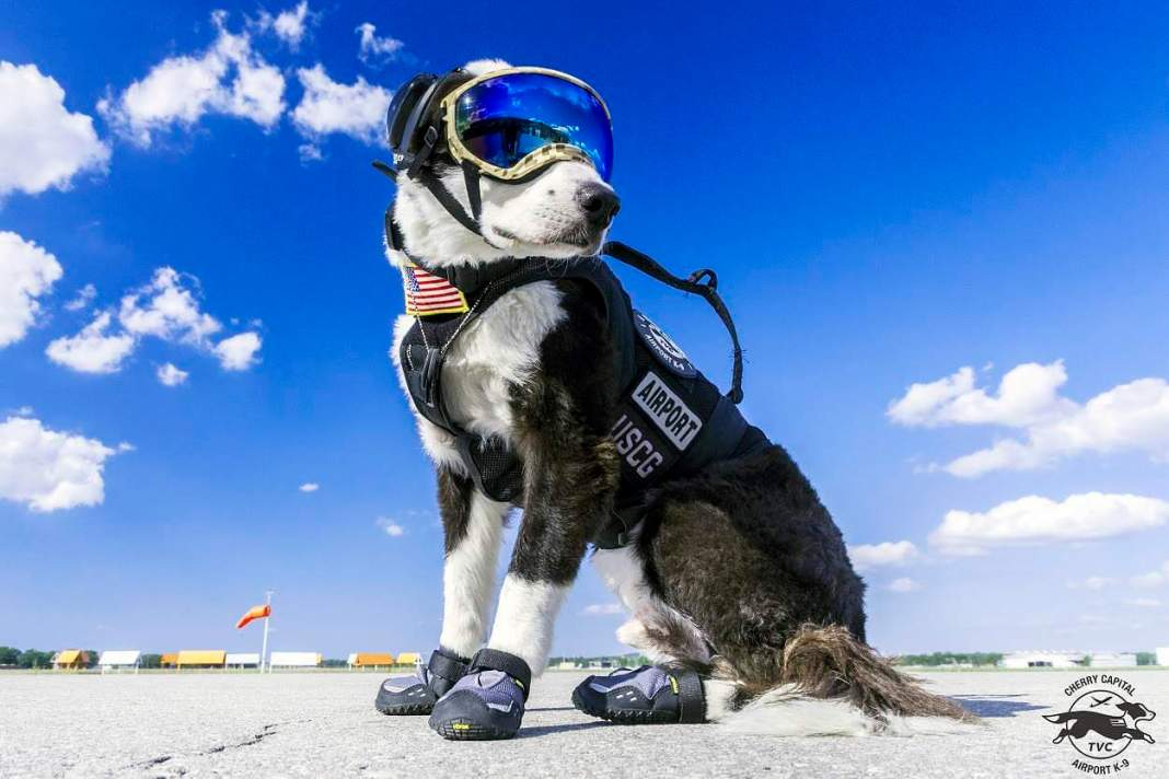 Meet Piper, Traverse City's Airport Guard Dog