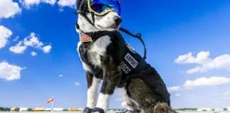 Meet Piper, Traverse City's Airport Guard Dog