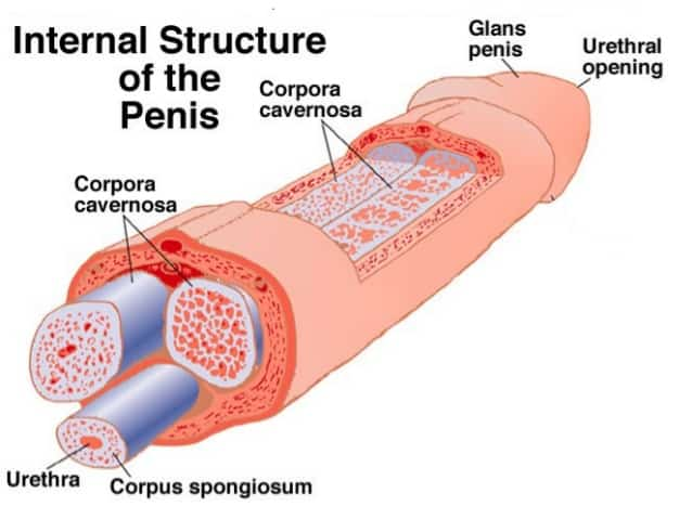 penis raft