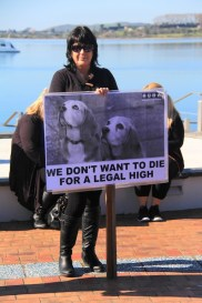 Tauranga Animal Testing Protest 30.7.2013 (5)