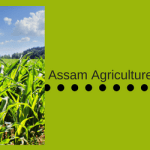 Agriculture Dept Assam Recruitment 2017-18 Vacacny 601 Posts