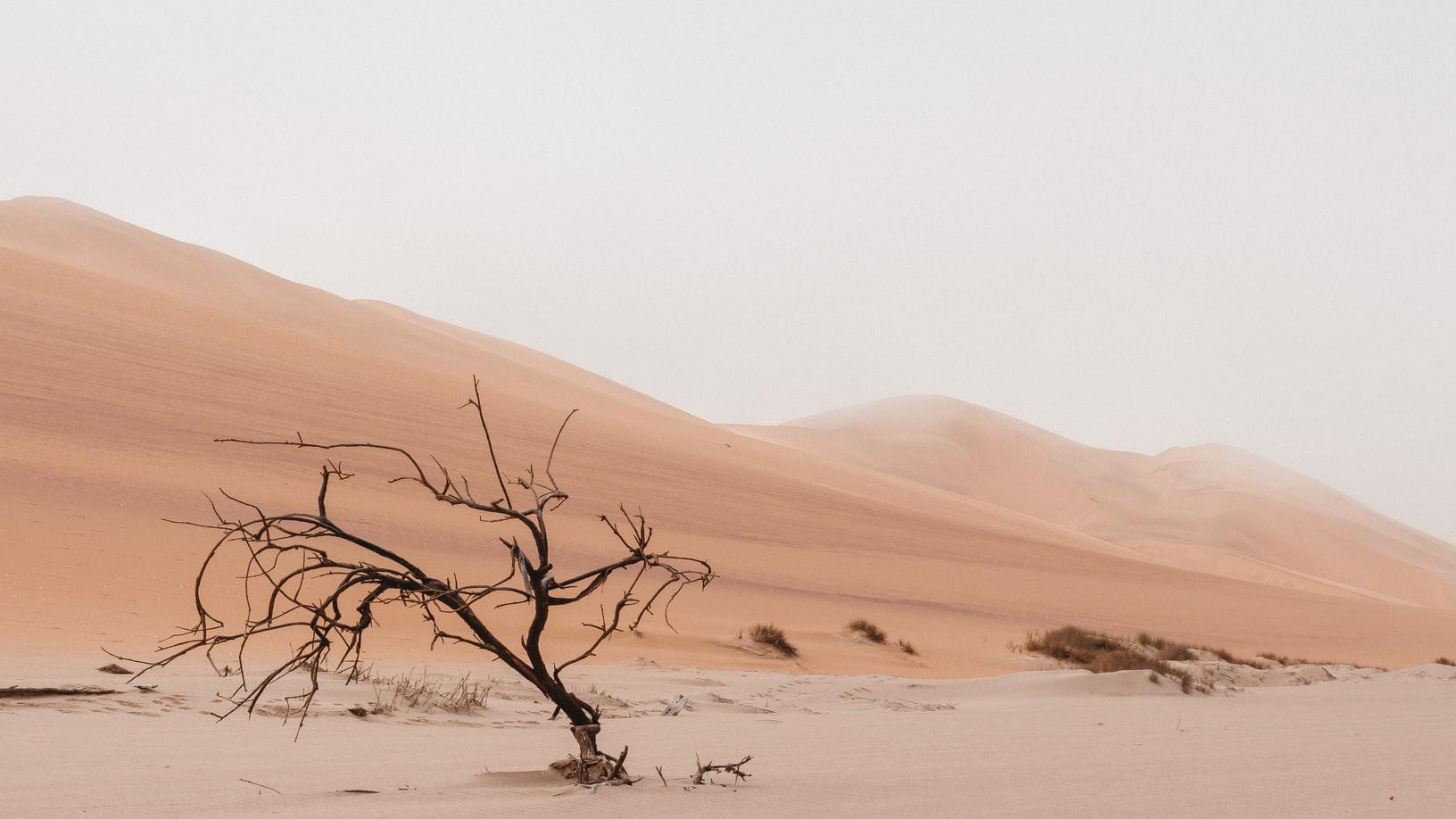 A dead treat in front of desert dunes.