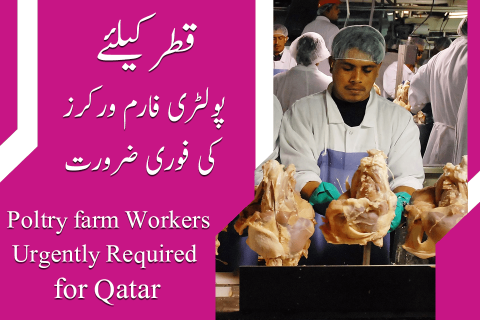 Qatar Poultry Farm Jobs Qatar Latest Jobs Jobsinurdu