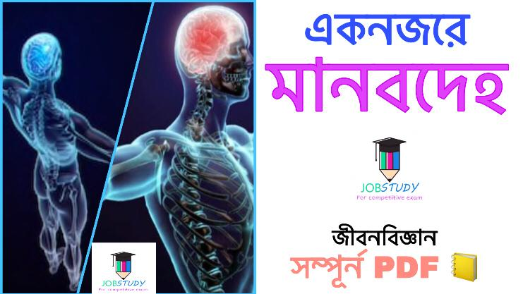 Read more about the article একনজরে মানবদেহ