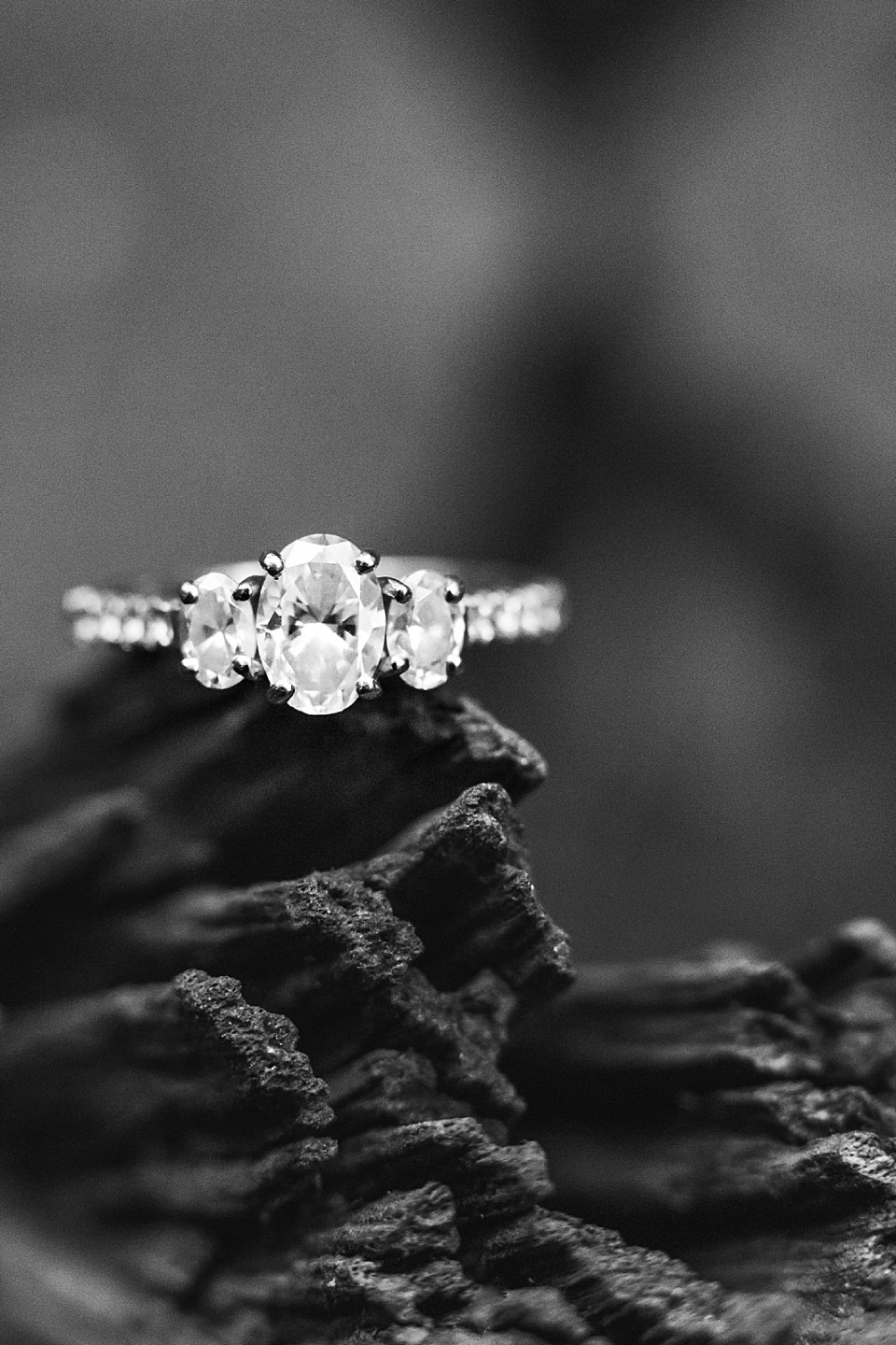 A black and white image of Maddy's engagement ring on a tree branch. One large diamond with two smaller diamonds on each side and more diamonds along the band.