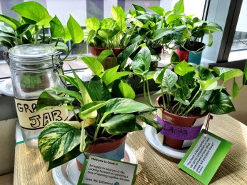Plants ready to be gifted to Students