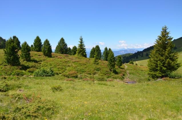 grassland at Passo Oclin